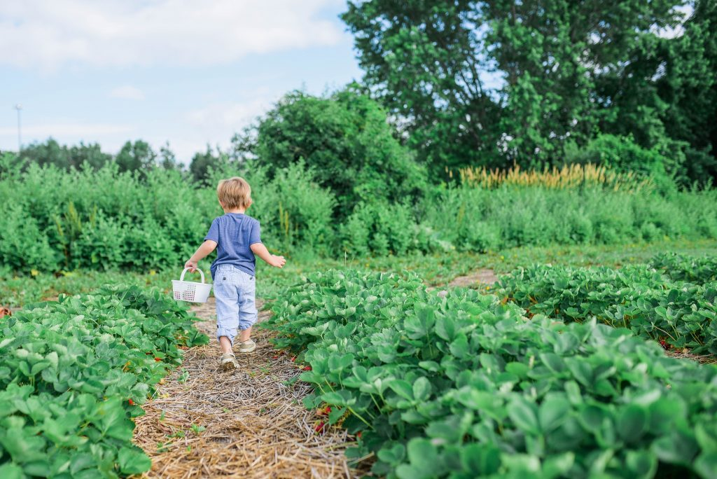 Is dong a CSA program worth it for farmers